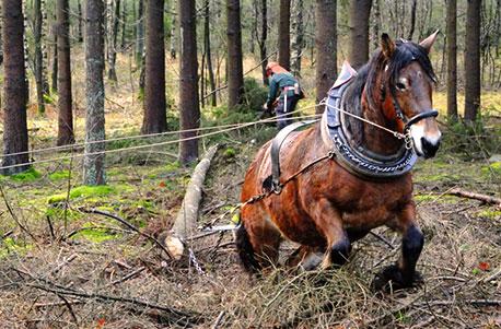 Pferden mit Finca Ferienwohnung
