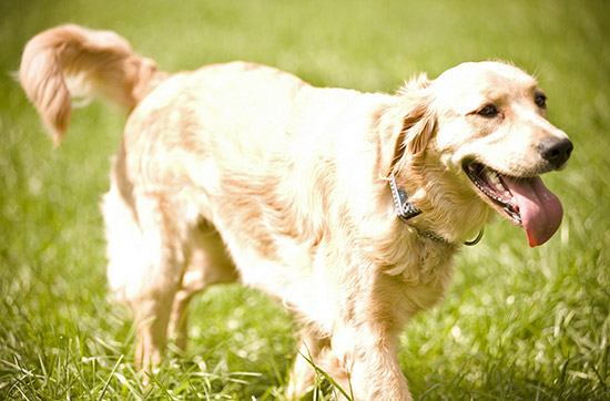 Crash-Kurs in der Hundeschule bei Traunreut