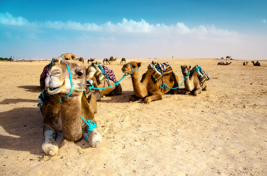 Kamelreiten
